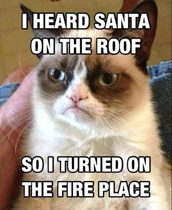 Funny Cats | Top 49 Most Funniest Grumpy Cat Quotes